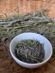 Harvesting the dried lavender flowers