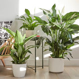 The Contented Company Your Ultimate Eco Friendly Zero Waste Gift Guide Indoor Plants from Patch