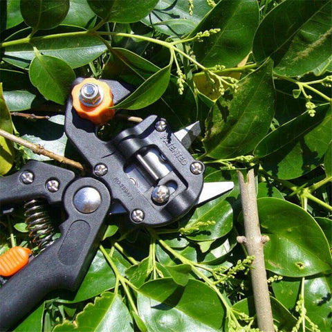 How Does This Tree Grafter Work?