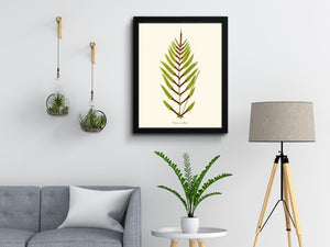 Fern Art Prints