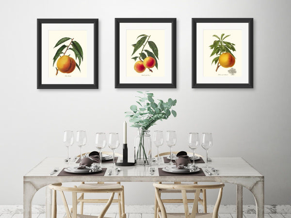 Fruit Prints