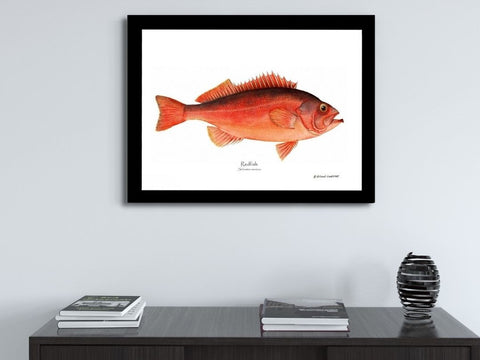 Fish Prints  | Illustrations