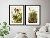 Audubon Lithograph Art Prints