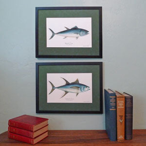 Fish Prints | Fish Illustrations