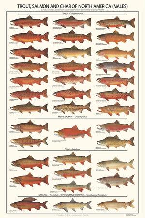 Trout, Salmon and Char Poster