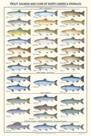 Trout, Salmon and Char-Females