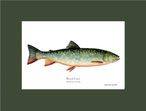 Brook Trout Salvelinus fontinalis