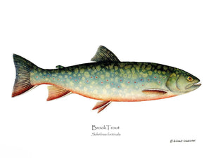 Fish Print: Brook Trout Salvelinus fontinalis