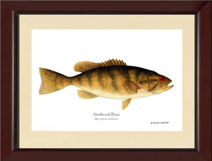 Smallmouth Bass Micropterus dolomieui