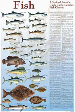 Seafood Poster and Guide Fish Species Identification Poster
