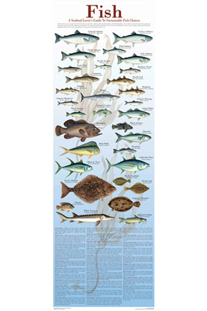 Seafood Poster and Guide To Sustainable Fish 12x36
