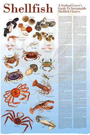 Sustainable Shellfish Poster and Seafood Guide