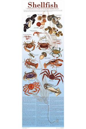 Seafood Poster and Guide Shellfish Species Identification Poster