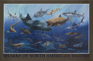 Shark Species of North American Waters Identification Poster