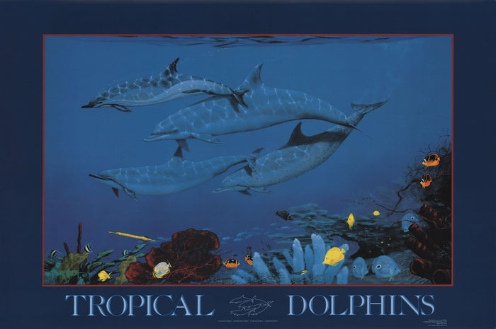 Tropical Dolphins Poster