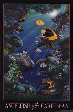 Angelfish of the Caribbean Species Identification Poster