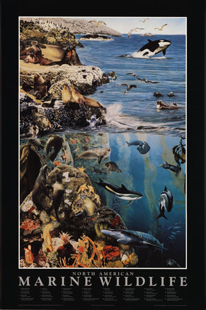 Marine Wildlife Species Identification Poster