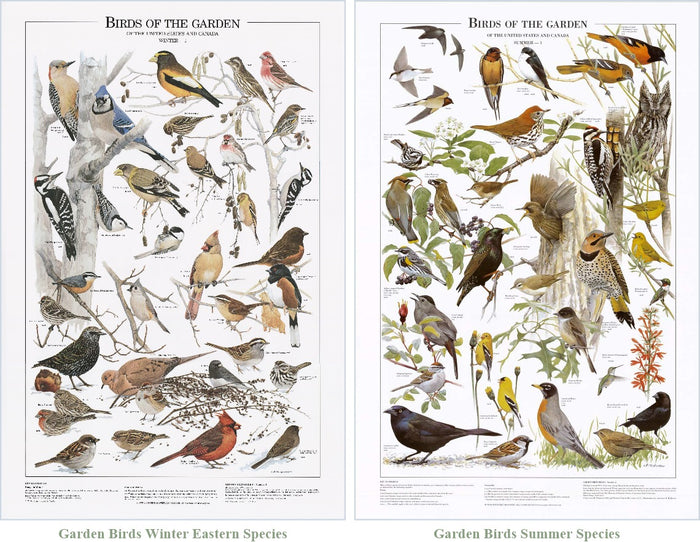 Garden Bird Mini Set.  Eastern and Summer Species Identification Charts