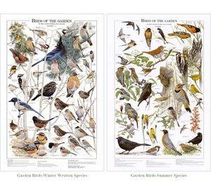 Garden Bird Mini Set.  Western and Summer Species Identification Charts