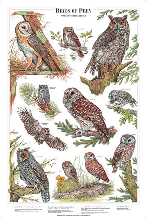 Owls of North America Poster/Identification Chart Vol 1