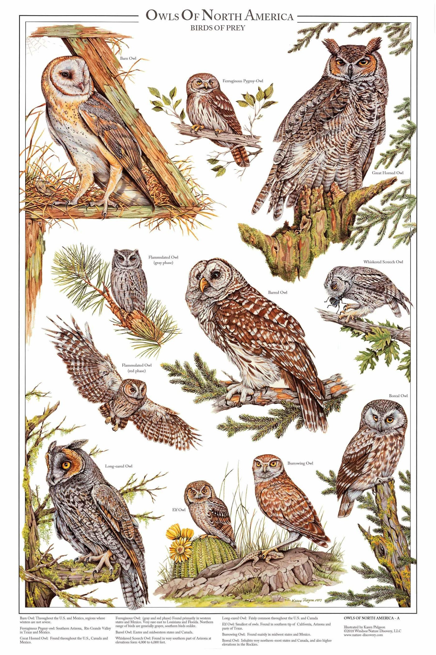 Owls Of North America Vol 1 Poster And Identification Chart Charting Nature