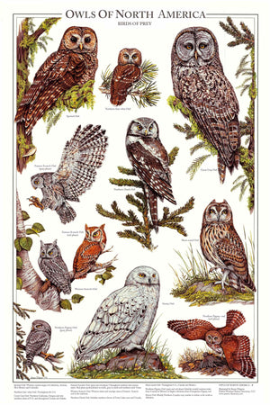 Owls Of North America Vol 1 - Mini Poster