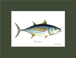 Atlantic tuna Thunnus alalunga