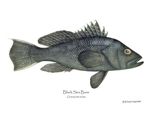 Fish Print: Black Sea Bass Centropristis striata