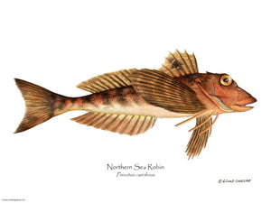 Fish Print: Northern Sea Robin Prinotus carolinus