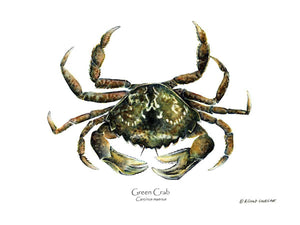 Shellfish Print: Crab, Green