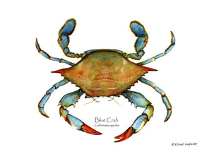Shellfish Print: Crab, Blue