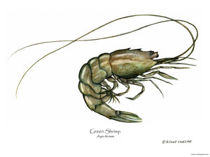 Shellfish Print: Shrimp, Green