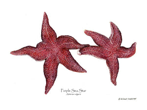 Shellfish Print: Sea Star, Purple
