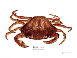 Shellfish Print: Crab, Rock