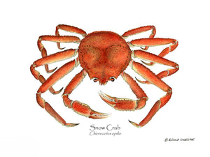 Shellfish Print: Crab, Snow
