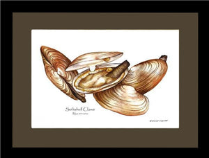 Clams, Softshell
