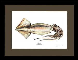 Shellfish Print: Squid