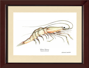 Shellfish Print: Shrimp, White