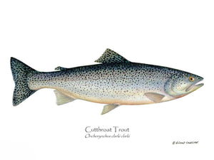 Fish Print: Cutthroat Trout Onchorynchus clarki clark