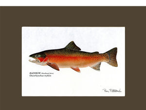 Rainbow Trout (Steelhead)