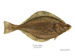 Fish Print: Pacific Sole Eopsetta jordani