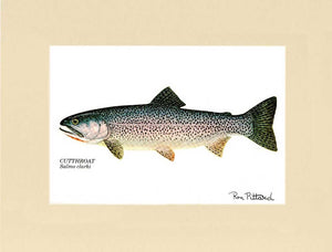 Cutthroat Trout - Ron Pittard