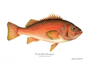 Fish Print: Pacific Red Snapper Sebastes ruberrimus