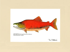 Sockeye Salmon Fish Print (Red landlocked form kokanee) - Fishing Wall Art Decor