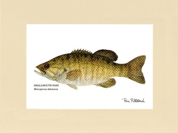 Gamefish Prints