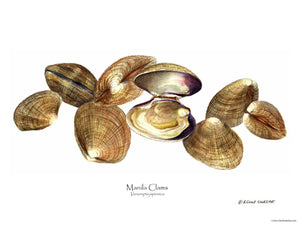 Shellfish Print: Clams, Manila