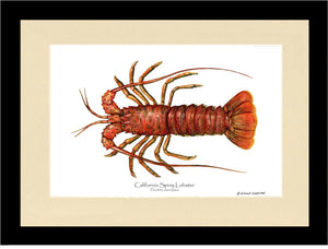 Lobster, California Spiny