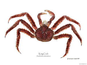 Shellfish Print: Crab, King