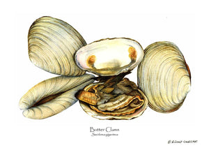 Shellfish Print: Clams, Butter