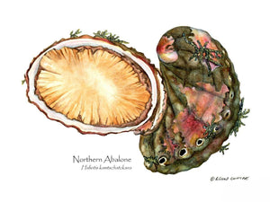 Shellfish Print: Abalone, Northern